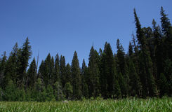 National Sequoia Park Crescent Meadow Stock Photos