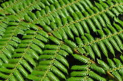National symbol: Tree Fern in New Zealand Stock Image