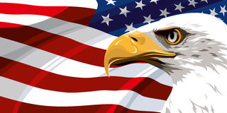 The national symbol of the USA. The national symbol of the United States of America Royalty Free Stock Photography