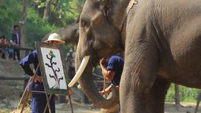 National Thai Elephant Day stock video