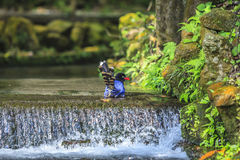National treasure Taiwan blue magpie Royalty Free Stock Photos