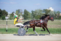 National trotting derby in Ploiesti - Race winner. National trotting derby in Ploiesti hippodrome (unique in Romania) hold on September, 2rd, 2012. Winner stock photography