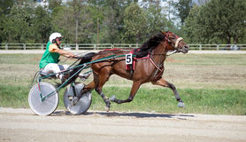 National trotting derby in Ploiesti - third place Stock Image