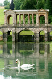National Trust Prior Park Palladian Bridge & Swan  Royalty Free Stock Photo