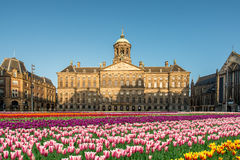 National tulip day at the Dam Square with the Royal Palace