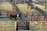 National Western Stock Show Cattle Pens Stock Photos