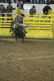 National Western Stock Show - Rodeo Royalty Free Stock Photography