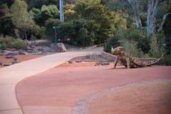 Nationale Botanische Tuinen, Canberra, Australië royalty-vrije stock afbeeldingen