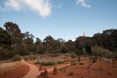 Nationale Botanische Tuinen, Canberra, Australië royalty-vrije stock fotografie