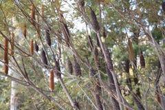 Nationale Botanische Tuinen, Canberra, Australië stock foto