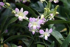 Nationale de Orchideetuin Singapore van Singapore van de orchideeëntuin Stock Foto