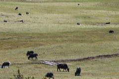 Nationale het Parkjakken van Shangri-Lapudacuo stock foto