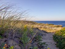 Nationale Küsten-Klippen Cape Cods bei Goldenhour lizenzfreies stockbild
