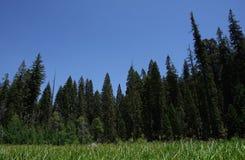 Nationale Mammutbaum-Park-Halbmond-Wiese Stockfotos