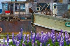 Nationale Parken van Alaska stock foto's