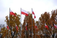 Nationale vlag van Polen royalty-vrije stock foto
