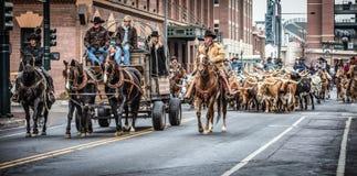 Nationale westliche Show-Parade auf Lager Stockfotografie