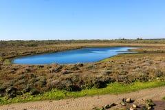Nationaler Sumpf von Vila Real de Santo Antonio in porugal Stockfotografie