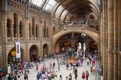 Nationales Geschichtsmuseum, ist- eins des Lieblingsmuseums für Familien in London Lizenzfreie Stockfotografie