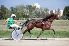 Nationales Trotten Derby in Ploiesti - dritter Platz Stockbilder