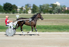 Nationales Trotten Derby in Ploiesti - Janina Lizenzfreies Stockfoto