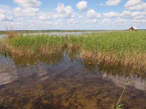 Nationalpark Ķemeri (Lettland) Stockbilder