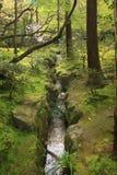 Nationalpark Royalty Free Stock Image