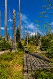 Nationalpark Zdjęcie Royalty Free