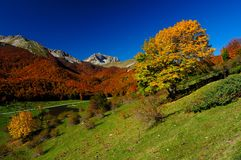 Nationalpark Abruzzo Lazio Molise Royaltyfri Bild