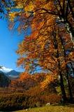 Nationalpark Abruzzo Lazio Molise Royaltyfria Foton