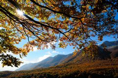 Nationalpark Abruzzo Lazio Molise Royaltyfria Bilder