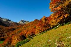 Nationalpark Abruzzo Lazio Molise Royaltyfri Fotografi