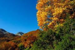 Nationalpark Abruzzo Lazio Molise Royaltyfri Foto
