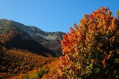 Nationalpark Abruzzo Lazio Molise Arkivfoto