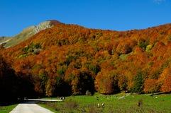 Nationalpark Abruzzo Lazio Molise Arkivfoton