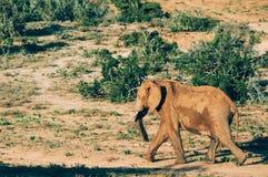 Nationalpark Addo-Elefanten, Ostkap, Südafrika Stockfotografie