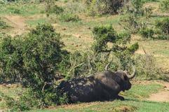 Nationalpark Addo-Elefanten, Ostkap, Südafrika Stockbilder