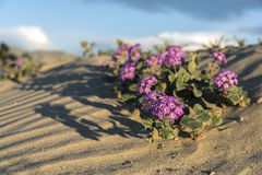 Nationalpark Anza Borrego Stockbilder