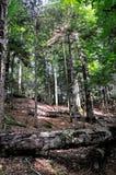 Nationalpark Biogradska Gora, Montenegro stockbilder