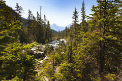 Nationalpark brittiska columbia, Kanada för yoho för Yoho flodsikt Royaltyfri Foto