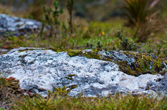 Nationalpark Cajas stockfotografie