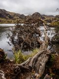 Nationalpark Cajas in der Stadt von Cuenca in Ecuador stockfotografie