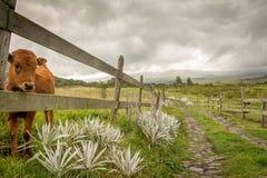 Nationalpark Cotopaxis stockfotos