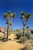 Nationalpark dell'albero di Joshua Fotografia Stock Libera da Diritti
