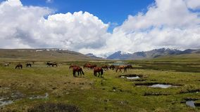 Nationalpark Deosai, Astore-Tal, Gilgit Baltistan, Nord-Pakistan stockfotografie