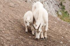 Nationalpark des Gebirgsziegen- und -kinderjaspisses lizenzfreies stockbild