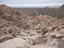 Nationalpark des Joshua-Baums Lizenzfreie Stockbilder