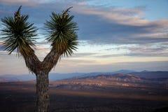 Nationalpark des Joshua-Baums Stockfoto