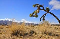 Nationalpark des Joshua-Baums Lizenzfreies Stockfoto
