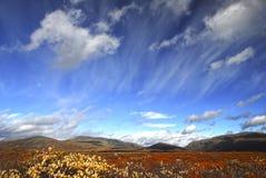 Nationalpark Dovre, Norwegen Stockfotografie